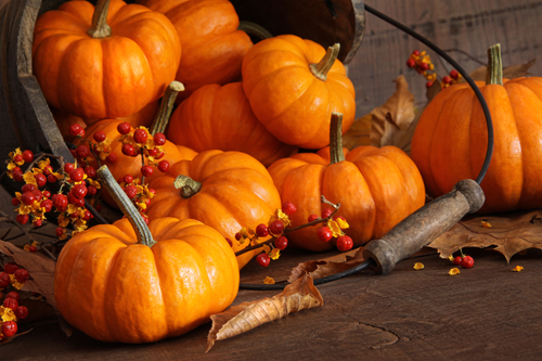 Photo of small pumpkins with wood bucket